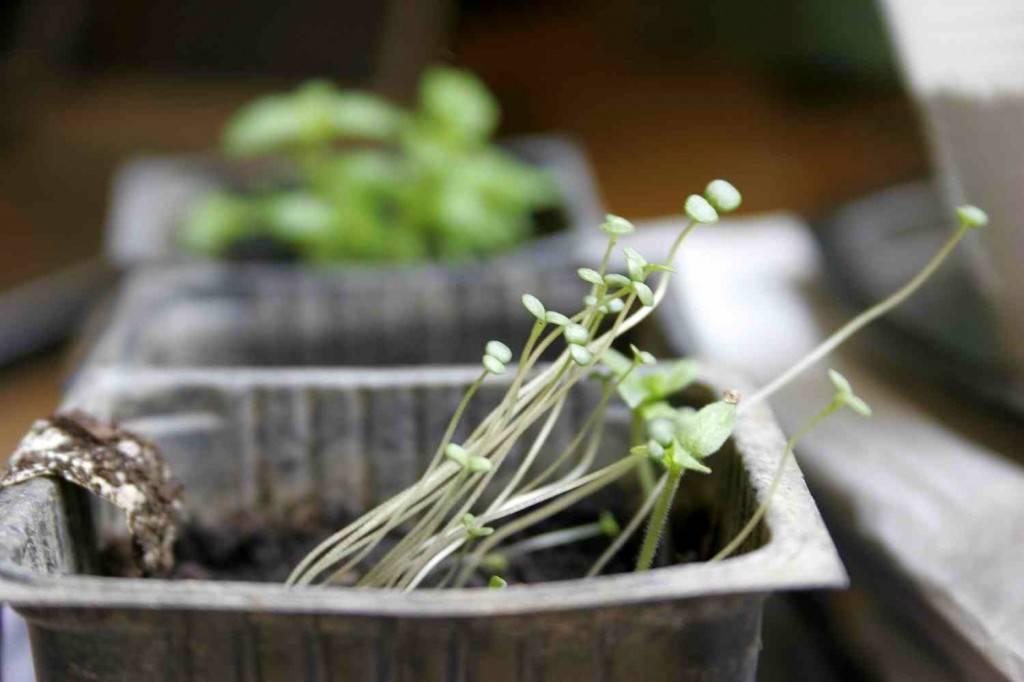 közösségi kertészkedés a lecsós kertben