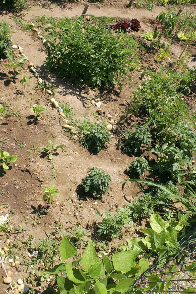 lecsós kert, közösségi kertészkedés