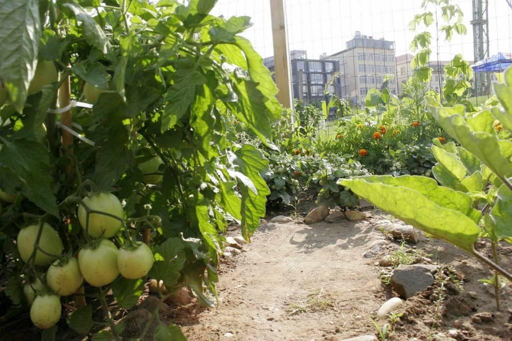 közösségi kert millenáris