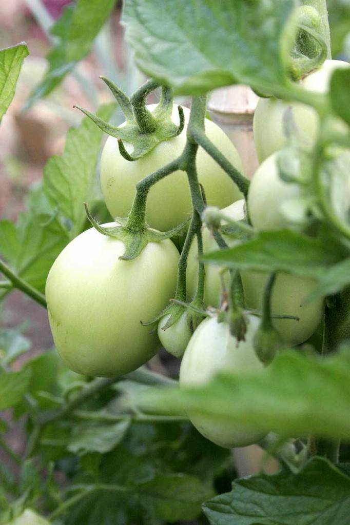 community gardening budapest hungary