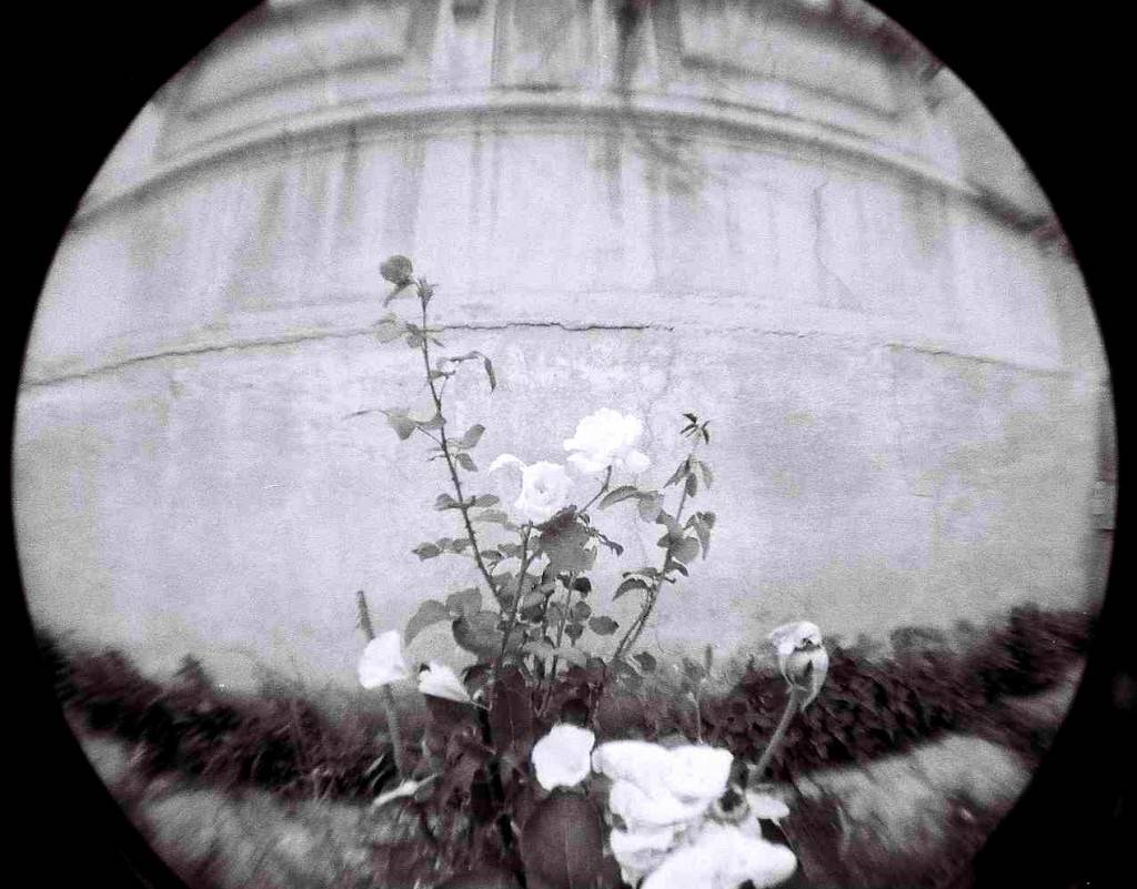 virág lomography géppel