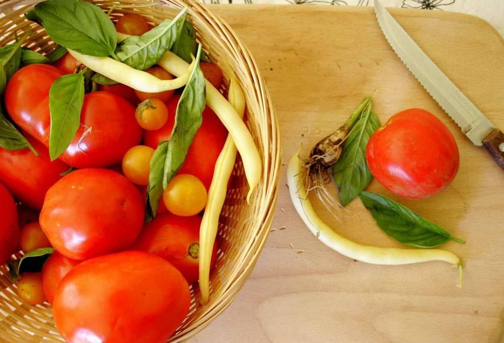 paradicsomszüret / tomato harvest