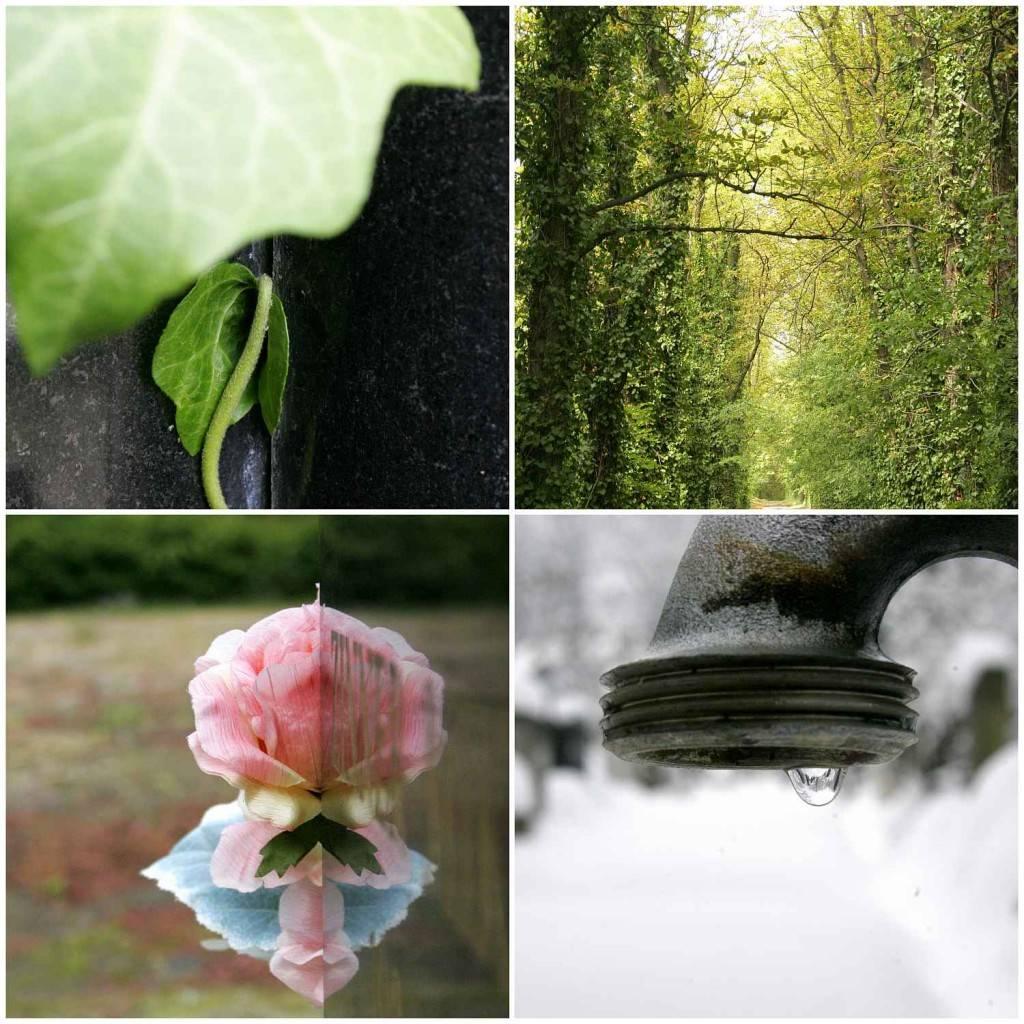 négy évszak a temetőben / four seasons in the cemetary