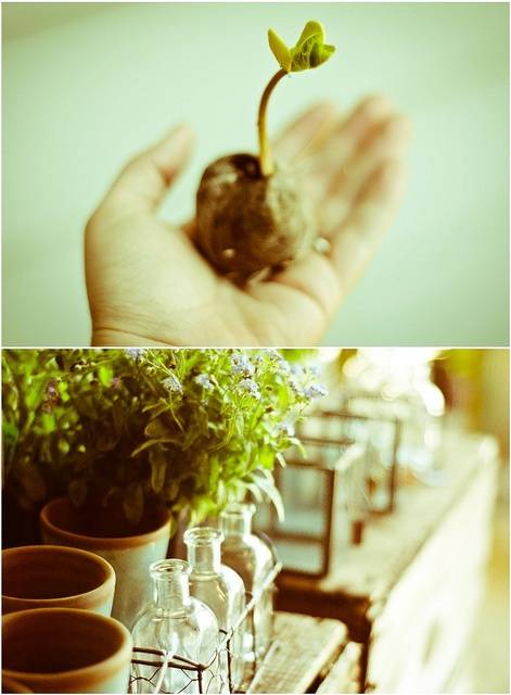 growth / növekedés