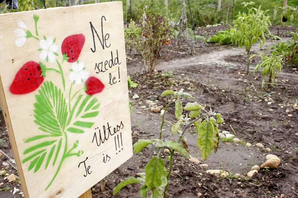 közösségi kert / community garden
