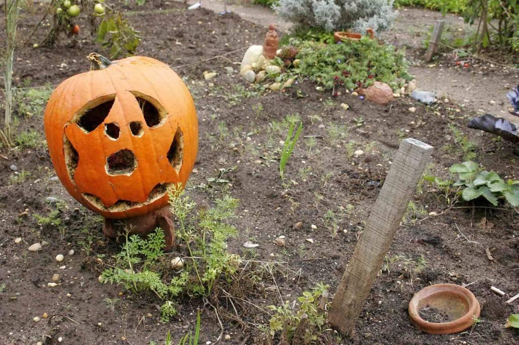 ősz a lecsós kertben