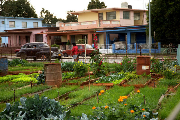 cuba community gardening