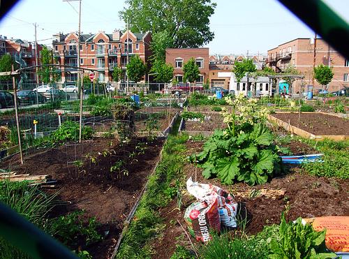 közösségi kertészkedés, detroit, usa