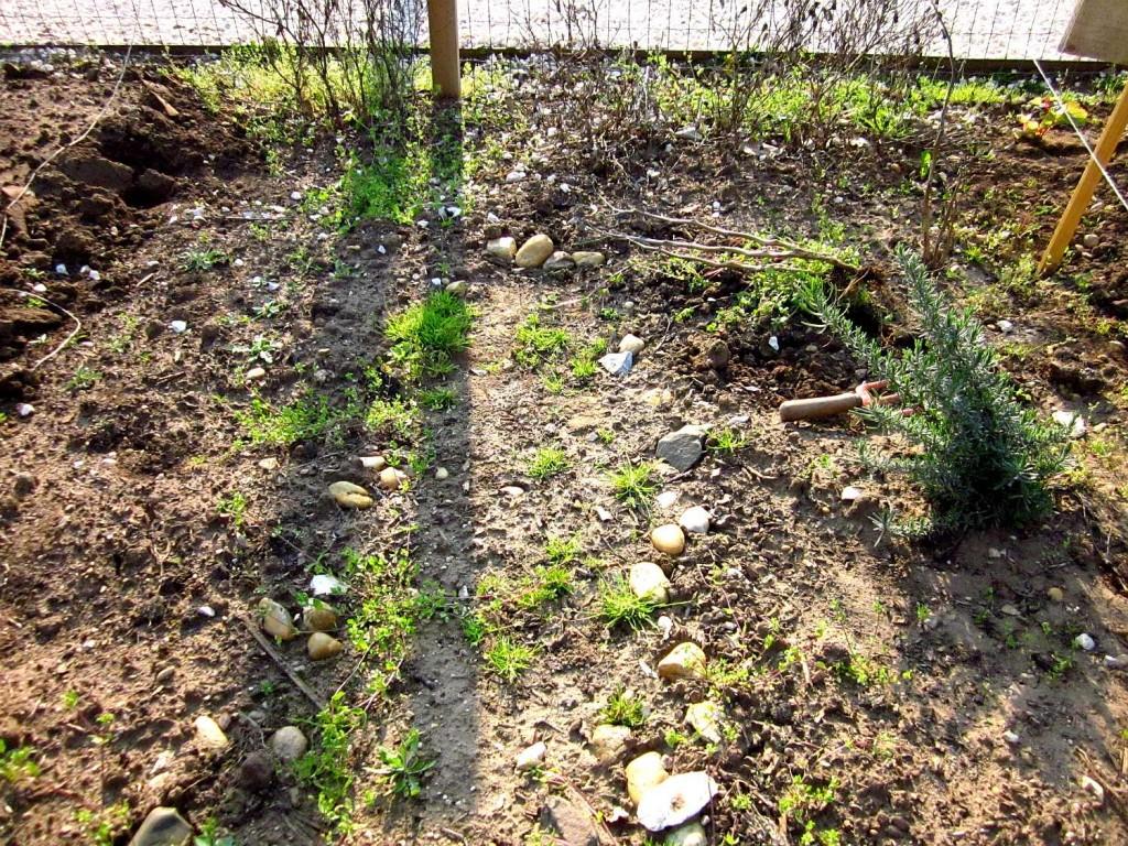 community garden kick off budapest