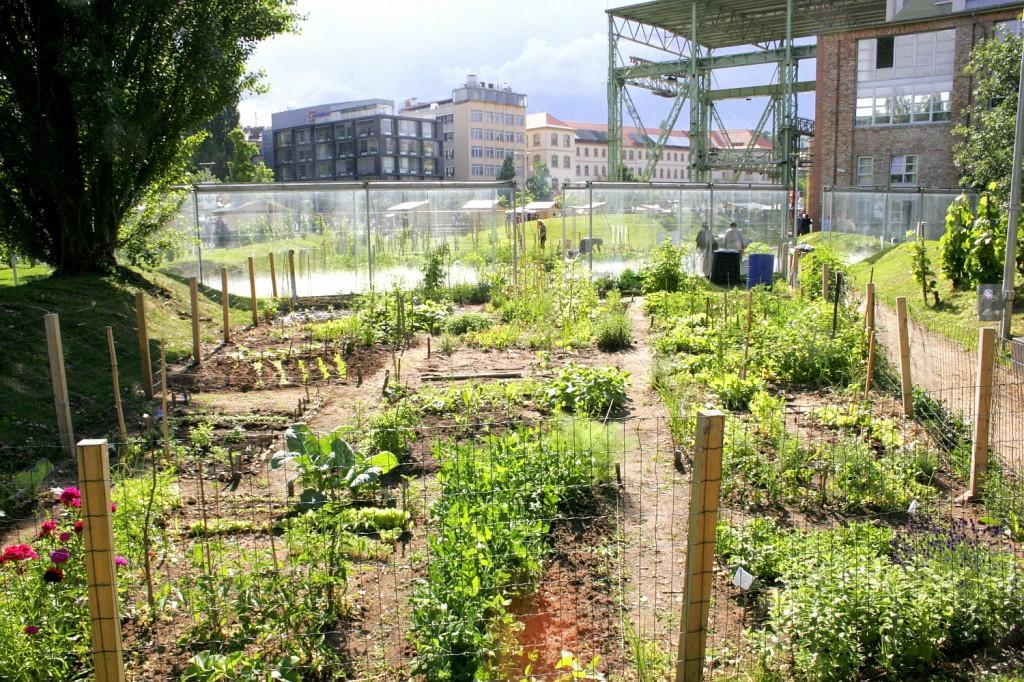 lecsós kert / community garden