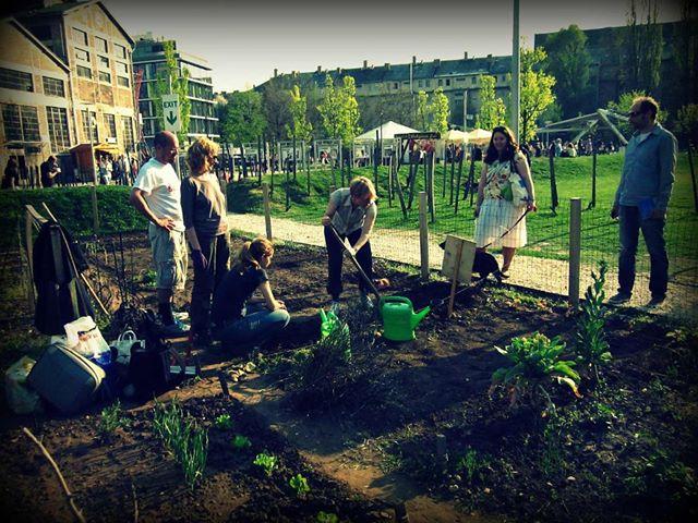 community gardening starts / kezdődik a közösségi kertészkedés