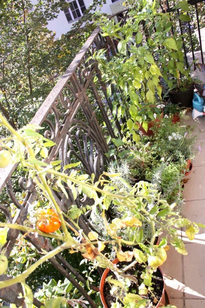 balkonkert / balcony garden
